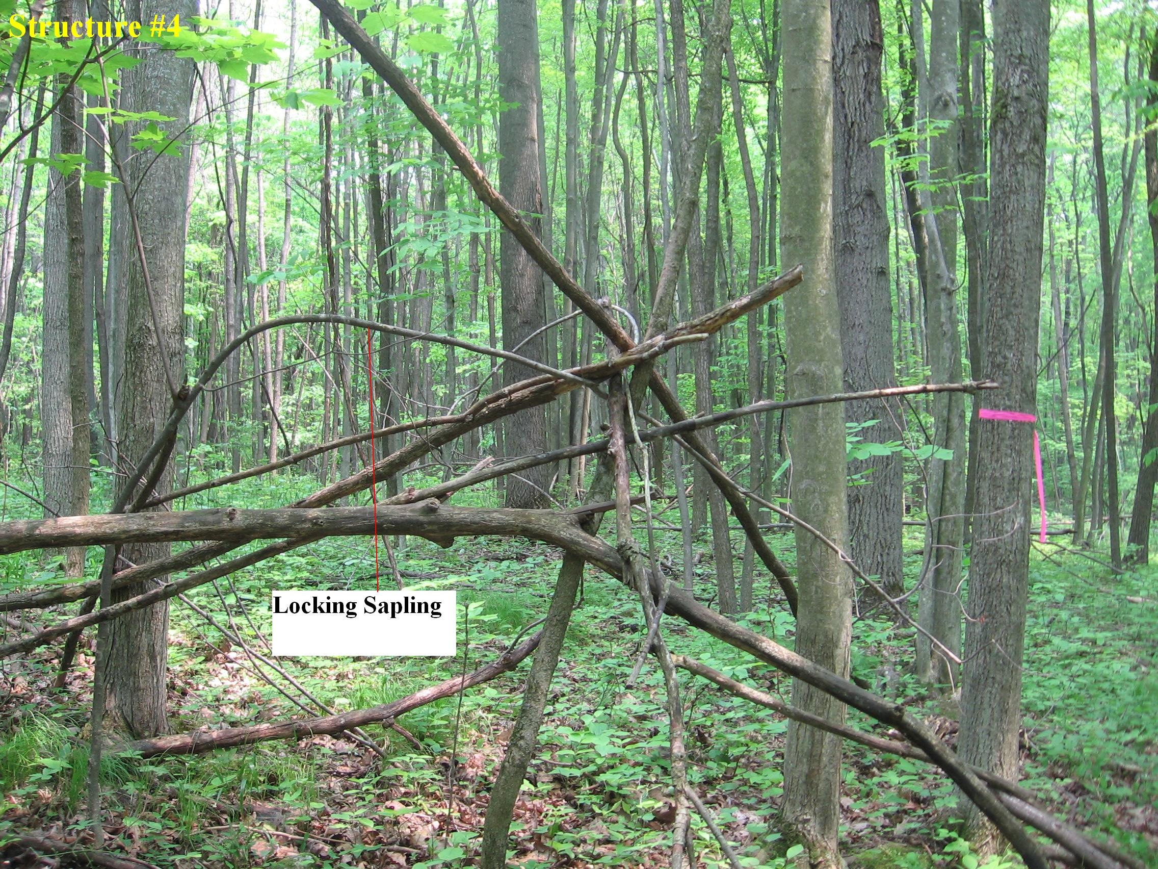 Structure #4, 5 foot tepee showing locking sapling