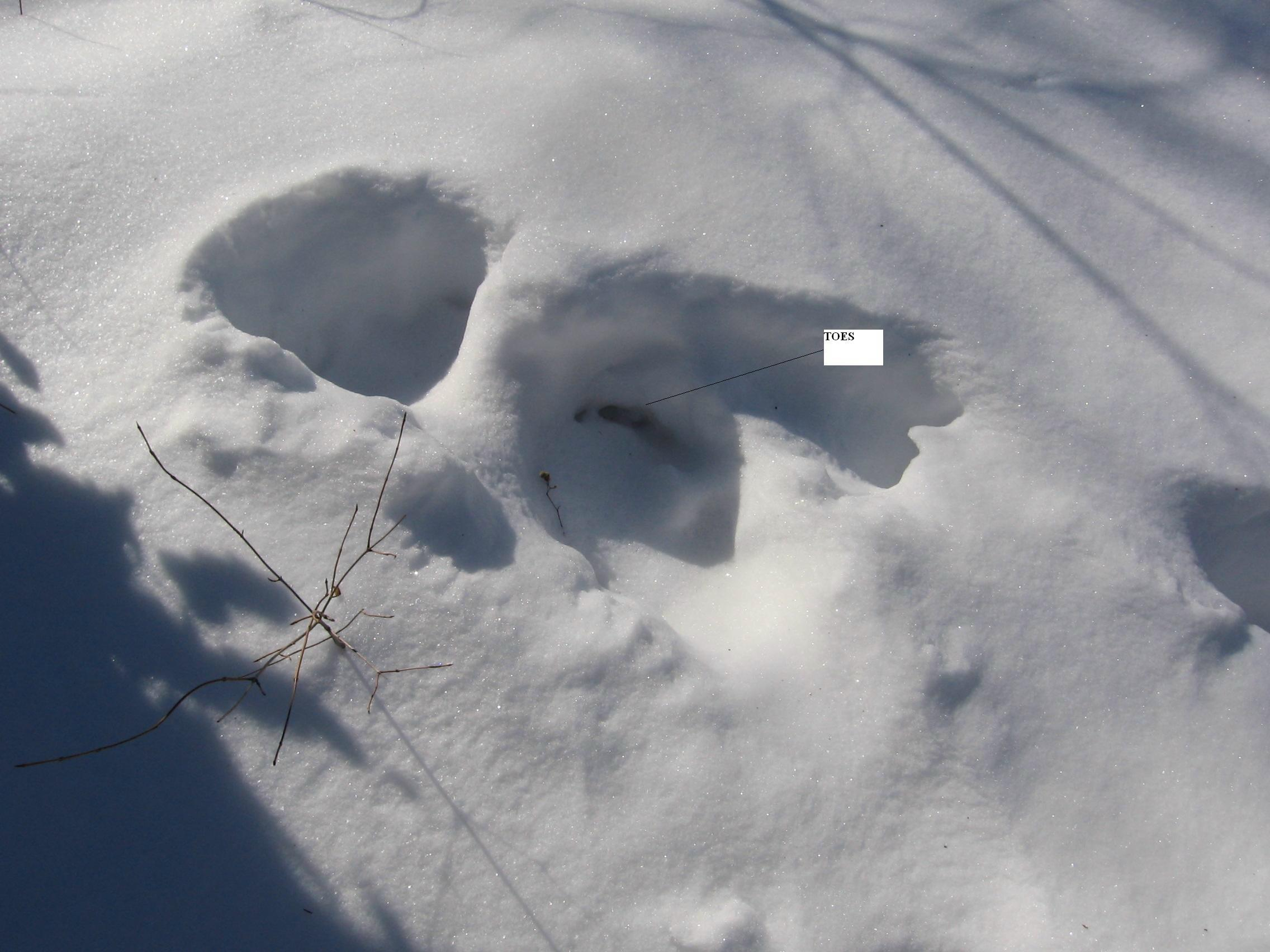 Photo of Bigfoot Toe Prints