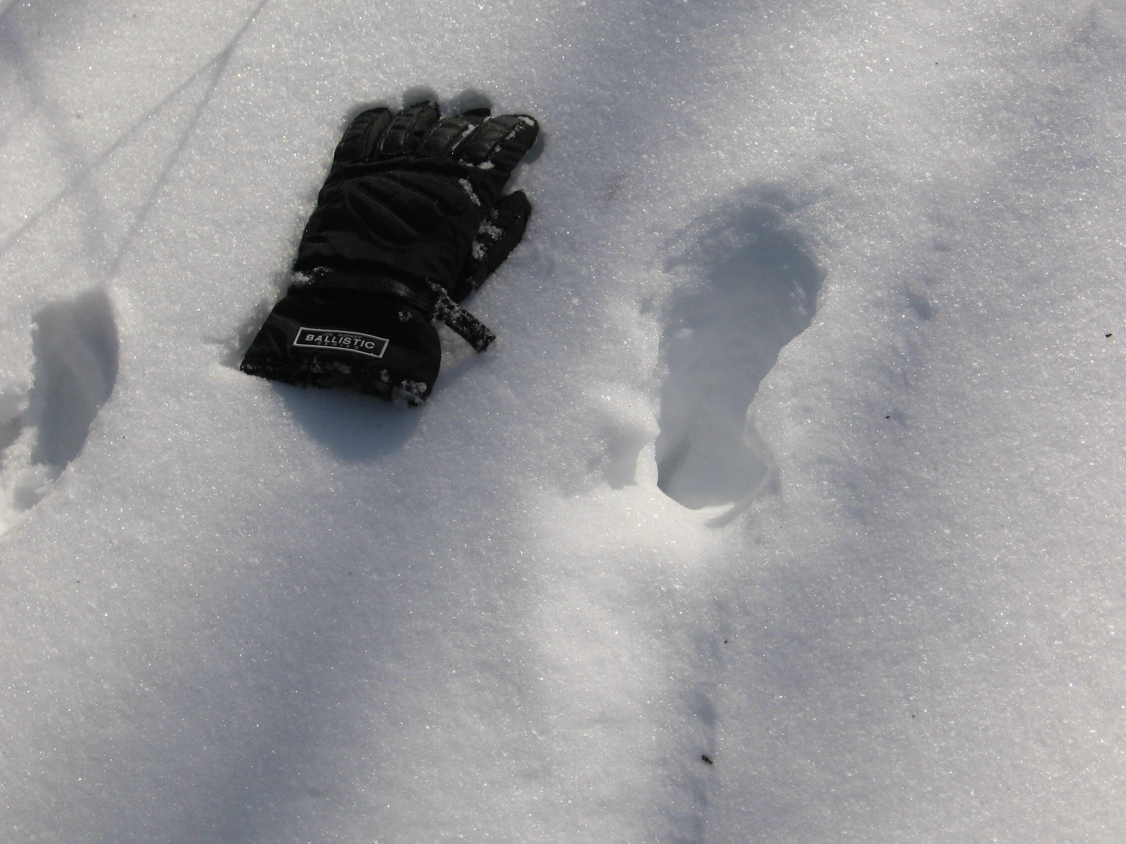 Photo of Glove Next to Smaller Bigfoot Tracks