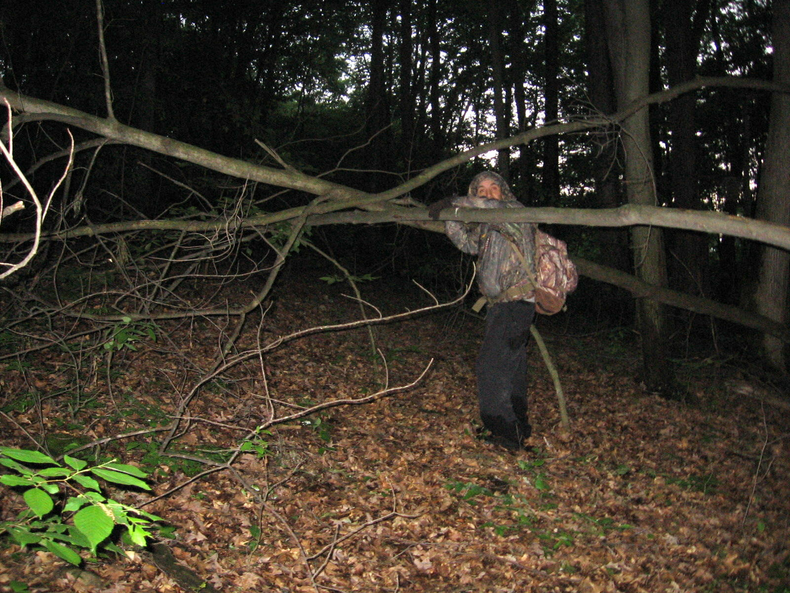 Photo Showing Path Blocked by Crisscrossing Bent Branches and Saplings