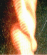 Alien and UFO Research: Possible Alien Photographed